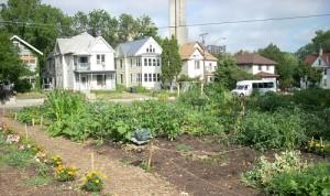Community garden small