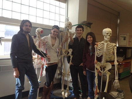 students with skeleton models