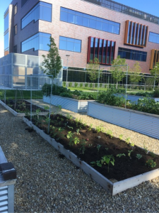 Augsburg's Medtronic foundation community garden