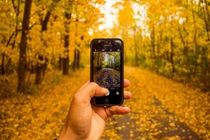 IPhone taking a picture of fall leaves.