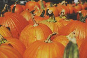 Close up on several pumpkins.