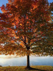 Tall tree with orange leaves.
