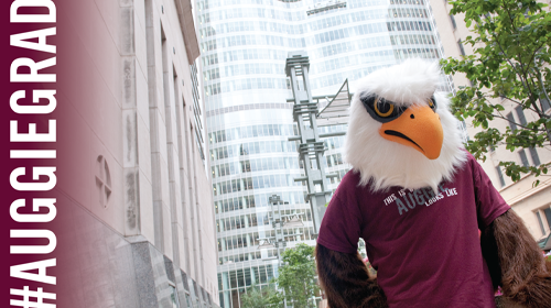 Zoom background with #AuggieGrad and Auggie Eagle