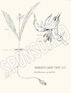 """Six Minnesota Wildflowers to Meet and Know"" by Amy Rice - Sponsored"