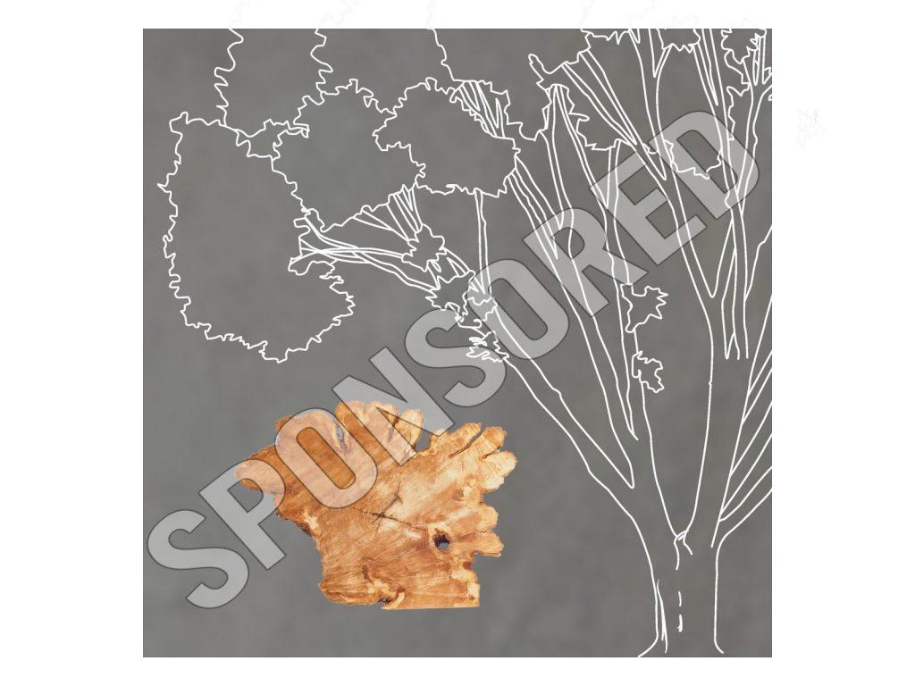 """Quad Elm Tree"" by Stephen Geffre - Sponsored"