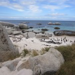 rocky beach view