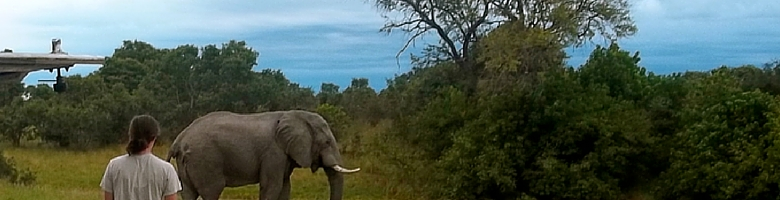 Student watches an elephant pass by