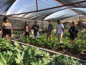 Students in a greenhouse