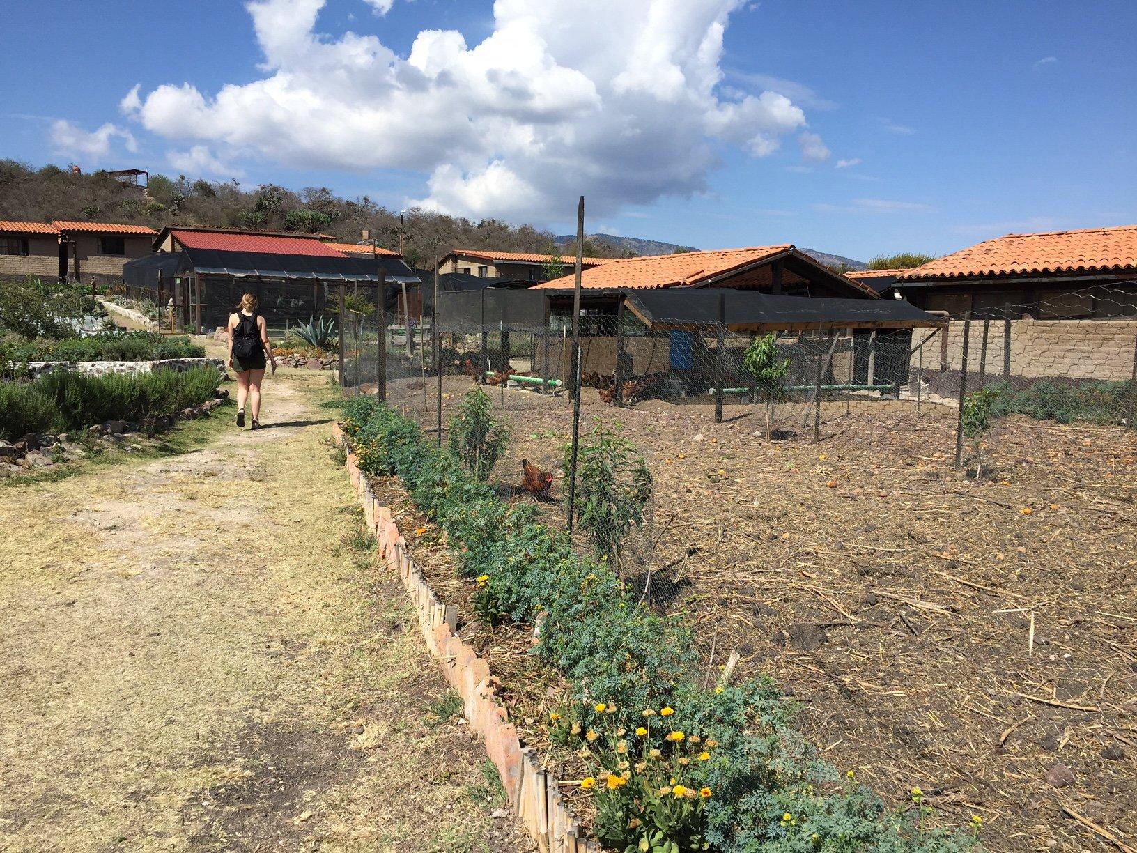 Planting food at farm