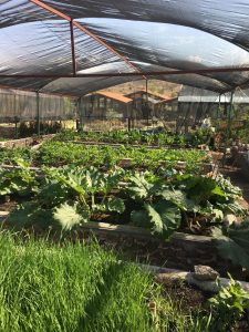 green house full in bloom
