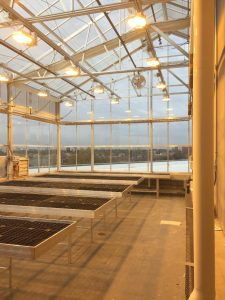 Grow tables in the rooftop greenhouse