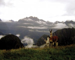 Llamas and the Lost City of the Incas Peru