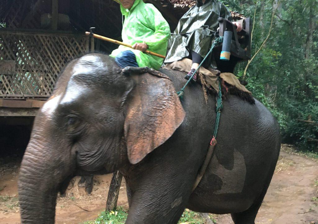 Jill Watson on an elephant