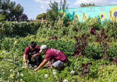 Augsburg's largest class kicks off academic year with volunteering