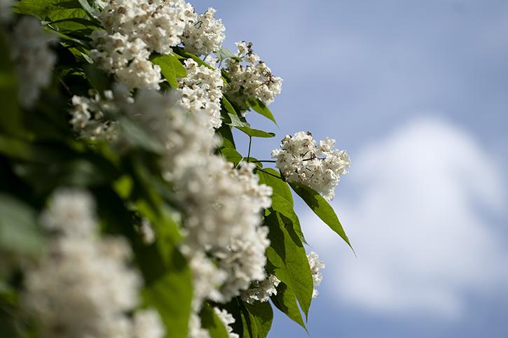 Flowers against a blue sky